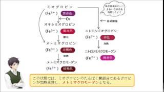 オキシミオグロビンのヘム鉄は、 酸化されて3価となっている。 (○or×)