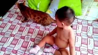 """бенгальская кошка и ребенок - питомник кошек Lantana Fly  - """"Cattery Bengal Cats""""1"""