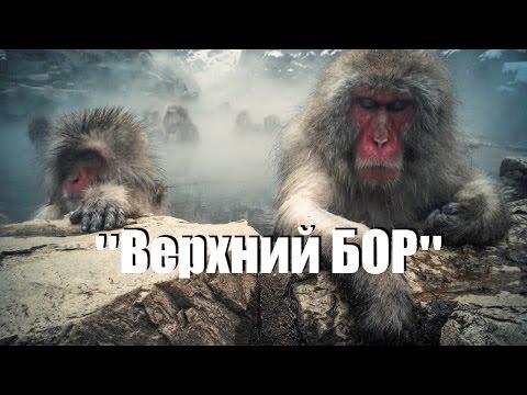Екатеринбург. Тюмень. Горячие источники Верхний Бор.