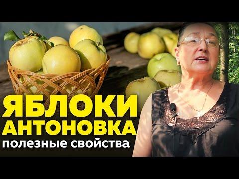 Яблоки антоновка - калорийность и свойства. Польза яблок