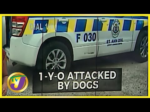 1 Yr Old Attacked by Dogs in St. Ann Jamaica | TVJ News - June 24 2021
