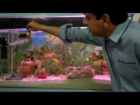 Tropical Aquarium Temperature | Summer Care | Fish For Aquarium Freshwater (Urdu/Hindi)