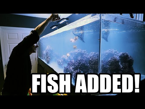 ADDING THE FISH TO THE SALTWATER AQUARIUM!