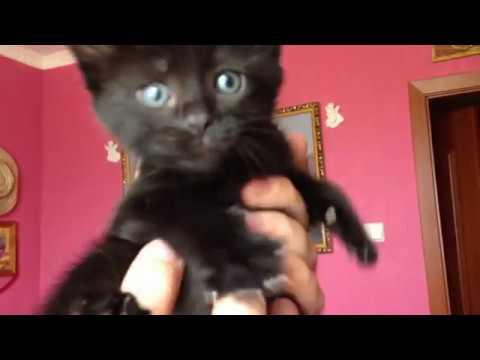 Вопрос: Как назвать котёнка, чтобы имя начиналось на Ч?