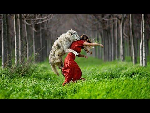 Причина, по которой этот волк НАПАЛ на женщину, заставит Вас ГОРДИТСЯ ИМ!