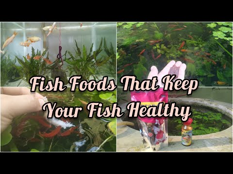 BEST FISH FOOD FOR YOUR FISH || FISH FOODS THAT MAKE YOUR FISH HEALTHY & STRONG || LIVE FISH FOOD