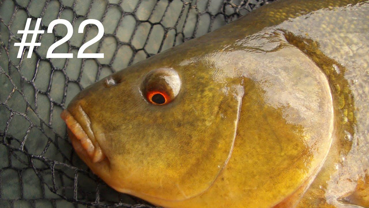 Подводная охота 2016 май линь, щука | трофейные КАБАНЧИКИ В МУТНЯКЕ