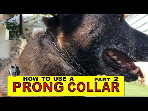 Pinch Collar #2 Understanding  Leash Pressure