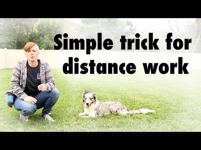 Simple trick for distance work - dog training