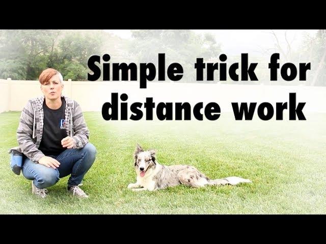 Distance work hack - dog training