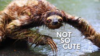 where-sloths-swim-and-monkeys-raid