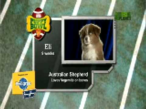 Puppy Bowl Classic: Starting Lineup