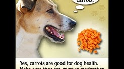 hqdefault - Can Diabetic Dogs Eat Oatmeal