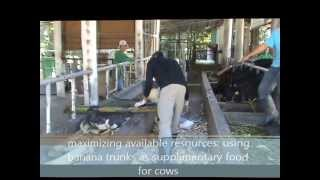 Video Chris Dalangin Dairy Farm Worker Philippines