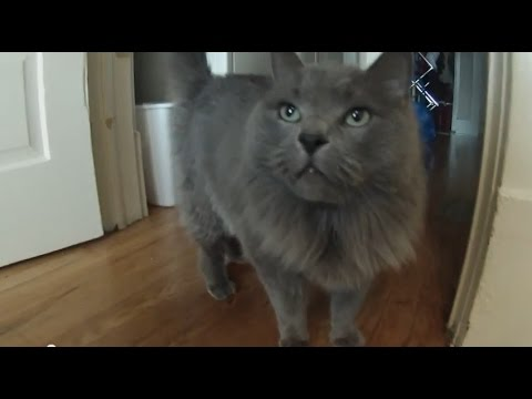 Shave Your Cat With Jacob Kittilstad