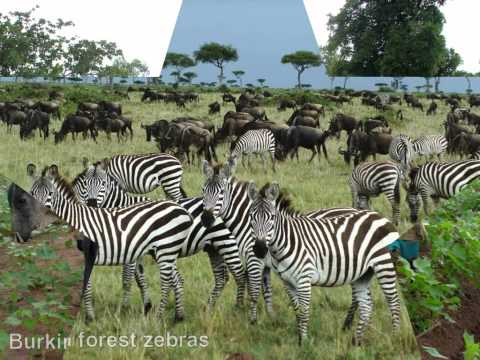 African Attractions