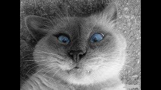 Приколы с котами и кошками | Приколы с животными | Август | 2017