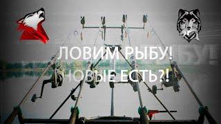 Русская Рыбалка 4! Russian Fishing 4! Потуримся?)