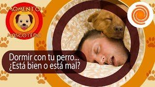 Dormir con tu perro... ¿Está bien o está mal? Te contamos los pro y los contra | Momento Mascotero