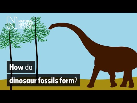 How do dinosaur fossils form? | Natural History Museum