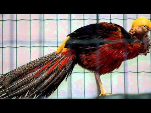 U news. В картинной галерее работает выставка Лучшие певчие птицы мира и родного края.