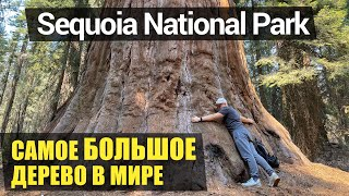 Национальный парк «Секвойя»   Часть 1   Генерал Шерман   Секвойи   Тоннели