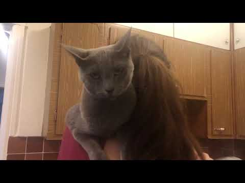 Family time with Russian Blue and Burmese cats while baby sings - throwback to summer days