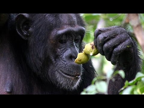 Download Youtube: Why do we drink alcohol? The Drunken Monkey Argument