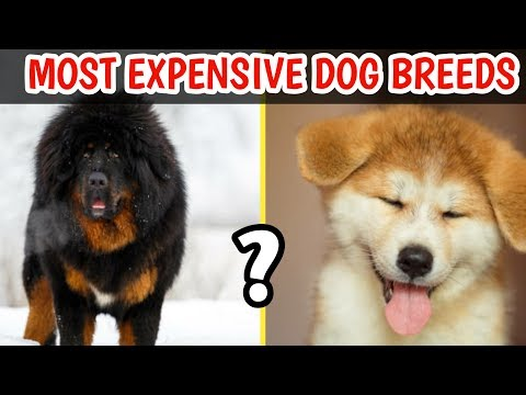 10 Expensive Dogs only 1% Can afford😱 / 10 Expensive Dogs Breeds