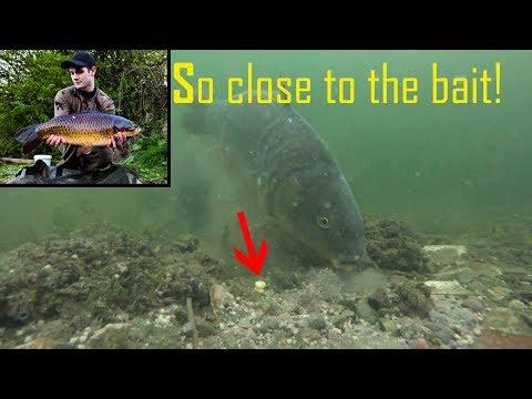 How Carp React To Sweetcorn Underwater!