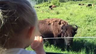 a day at riding mountain national park clear lake june 2016