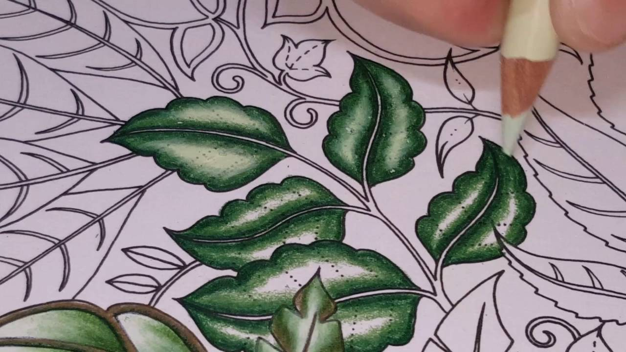 Leaf Coloring Enchanted Forest YouTube