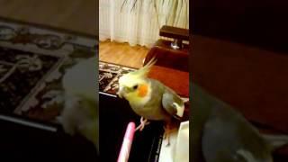 Говорящий попугай. Болтает без остановки. Смешное видео о животных.