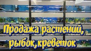 Объявление! Продажа аквариумных растений, рыбок, креветок! Купить аквариумные растения !
