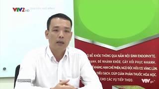 Endophyte - giải pháp nông nghiệp thông minh VTV2