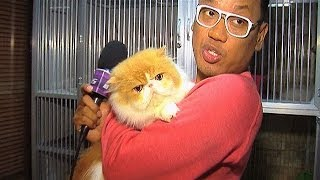 Puluhan Kucing Peliharaan Uya Kuya - Intens