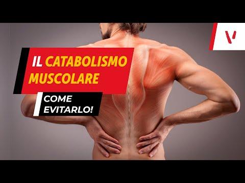Il catabolismo muscolare: come evitarlo