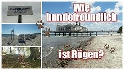 Hundefreundlichkeit Insel Rügen / Freizeitmöglichkeiten mit Hund