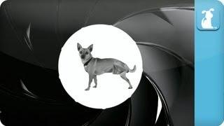 007 - James Bone - Dr. No No Sit - Petody