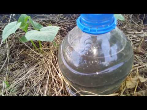 Капельный полив бутылками -всё гениально и просто!