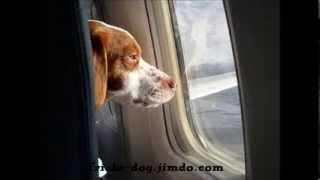 как перевозить собаку на поезде?_ how to carry a dog?