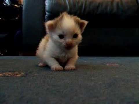 wee kitten