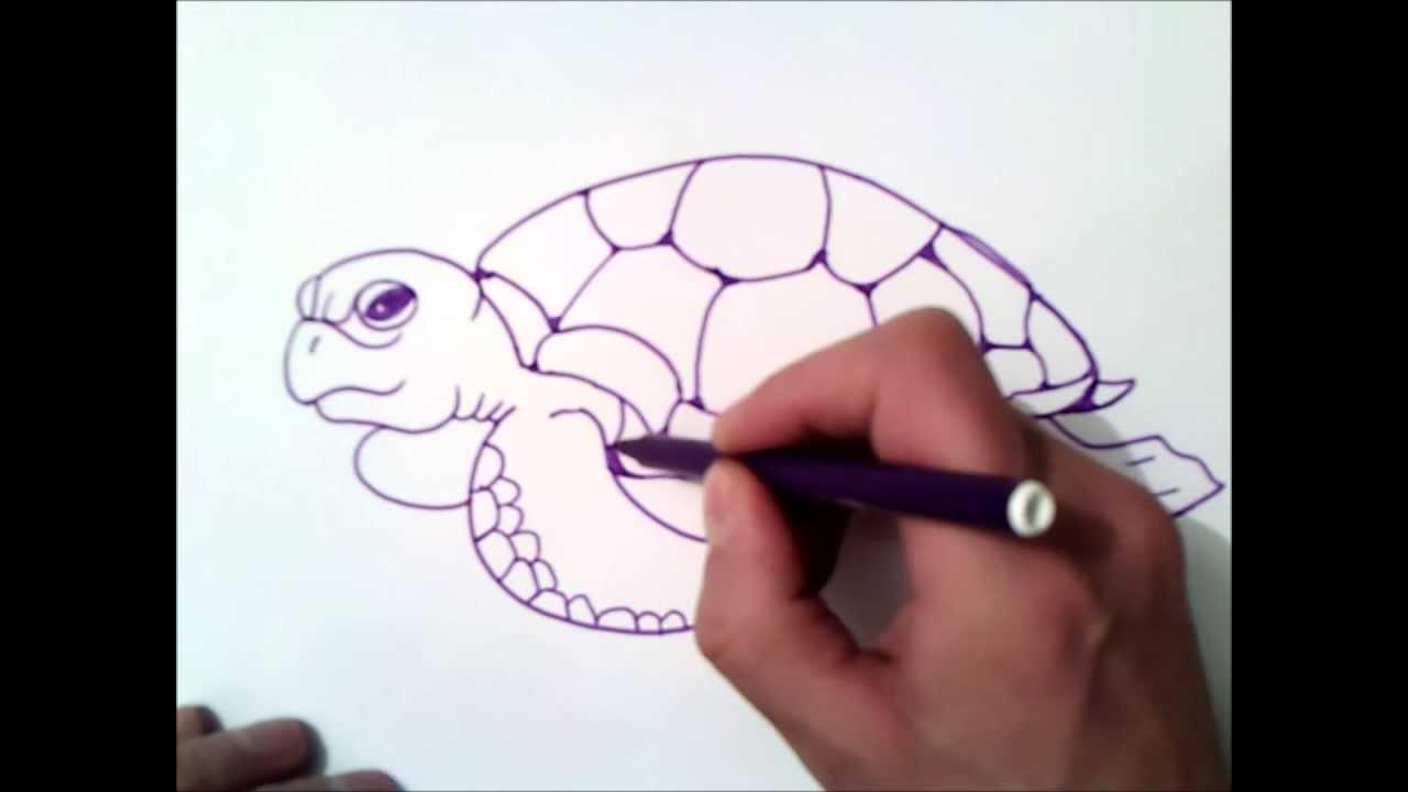 Como Desenhar Uma Tartaruga Marinha Como Desenhar Uma Tartaruga