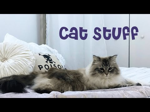 My Siberian Cat's Belongings | Luna's Stuff