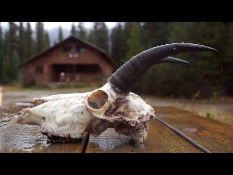 Mountain Goat Hunting In British Columbia With Outdoors International