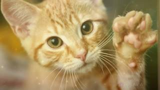 Самые необычные породы котов