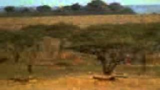 Amazing funny videos 2013 Tiger catch to deer