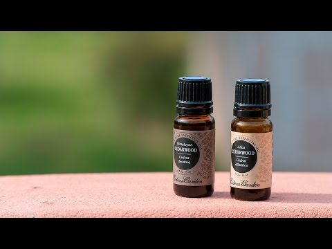 Cedarwood Atlas Essential Oil Benefits