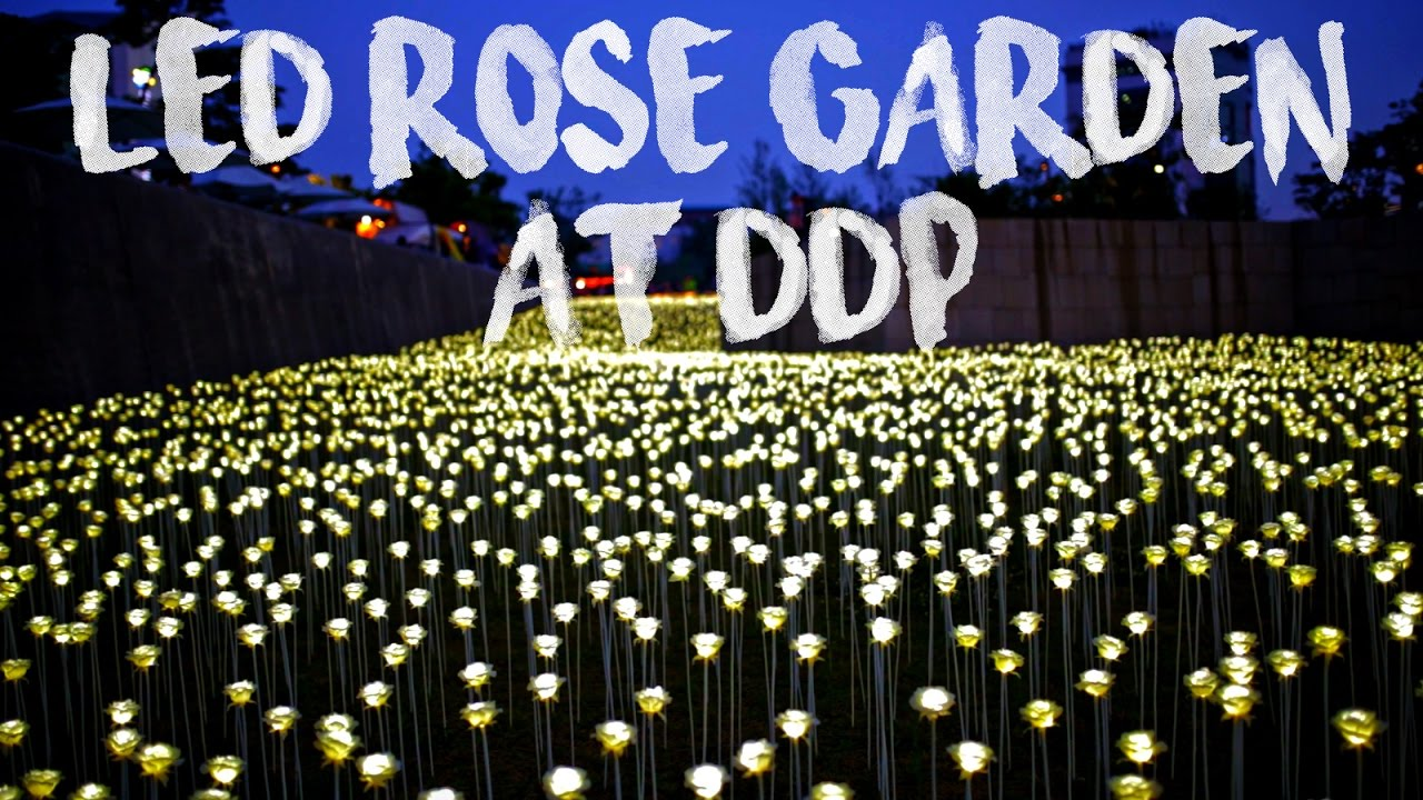 Korea Vlog 009 Ddp Led Rose Garden 장미 Eng Sub