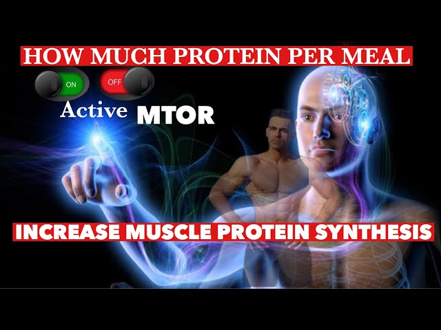 HOW MUCH PROTEIN  PER MEAL  TO ACTIVATE  (MTOR)  INCREASE MUSCLE PROTEIN SYNTHESIS